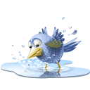 poolbird,bird,pool,tweet,twitter,water,animal,social network,social,sn