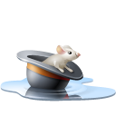 poolhat,animal,chapeau,eau,hat,mouse,pool,rat,souris,water