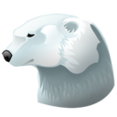 polar,bear,animal