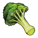 broccoli,fruit,vegetable