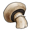 mushroom,fruit,vegetable