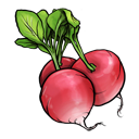 radish,fruit,vegetable
