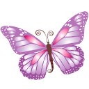 butterfly,purple