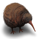 kiwi,flightless,bird,animal
