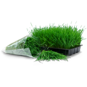 wheatgrass,tray,bag