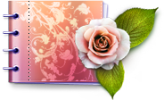 lovely,catalog,carnet,flower,love,rose,plant,valentine