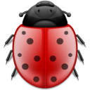 bug,animal,insect,ladybird
