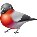 bullfinch,animal,bird,twitter,social network,social,sn