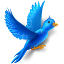 flying,bird,twitter,sparkle,animal,social network,social,sn