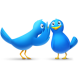 gossip,bird,twitter,animal,social network,social,sn